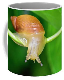 Morning Snail Coffee Mug