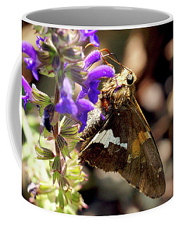 Coffee Mug featuring the photograph Moth On Purple Flower by Meta Gatschenberger