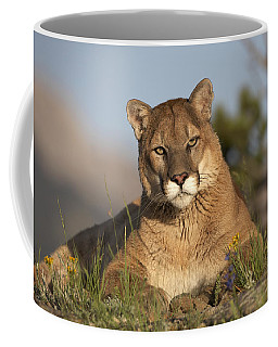 Mountain Lion Portrait North America Coffee Mug
