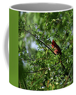 Coffee Mug featuring the photograph Mr Red by Skip Willits