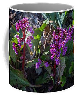 Msu Spring 11 Coffee Mug