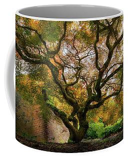Old Japanese Maple Tree Coffee Mug