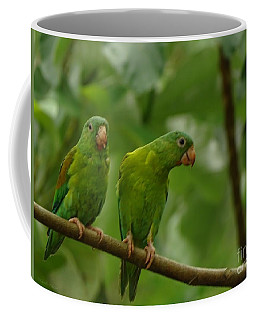 Orange -chinned Parakeets  Coffee Mug