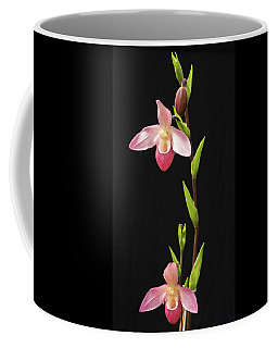 Coffee Mug featuring the photograph Orchids by Cathy Donohoue