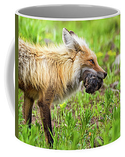 Out Foxed  Coffee Mug by Scott Warner