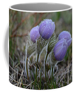 Pasque Flowers  Coffee Mug