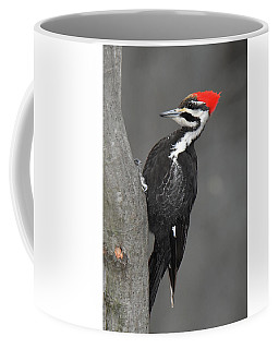 Pileated Woodpecker Coffee Mug by Alan Lenk
