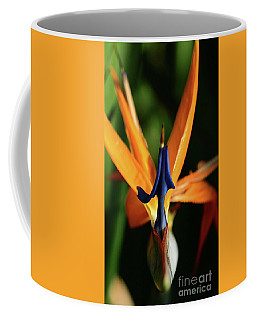 Coffee Mug featuring the photograph Point Well Taken by Cindy Manero