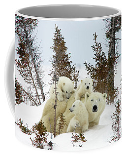 Polar Bear Ursus Maritimus Trio Coffee Mug