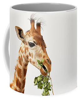 Coffee Mug featuring the photograph Portrait Of A Rothschild Giraffe  by Nick Biemans