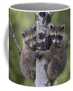 Raccoon Two Babies Climbing Tree North Coffee Mug