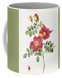 Rosa Eglantera Punicea Coffee Mug