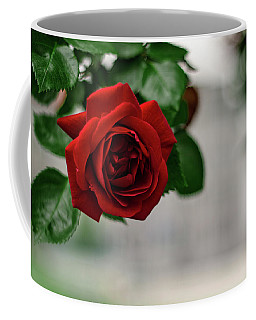 Roses In The City Park Coffee Mug