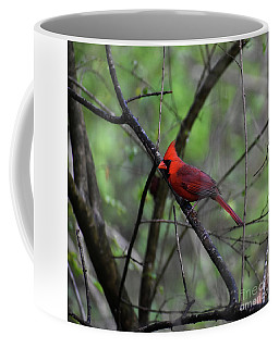 Coffee Mug featuring the photograph Saint Louis by Skip Willits