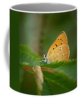 Coffee Mug featuring the photograph Scarce Copper by Jouko Lehto