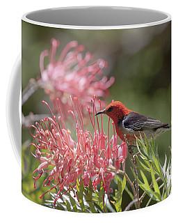 Scarlet Honeyeater Coffee Mug
