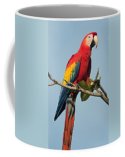 Scarlet Macaw Ara Macao, Tarcoles Coffee Mug