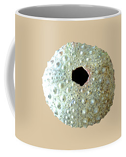 Sea Urchin Coffee Mug by Anastasiya Malakhova