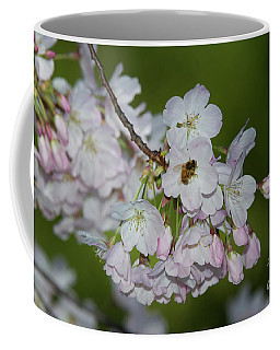 Silicon Valley Cherry Blossoms Coffee Mug by Glenn Franco Simmons