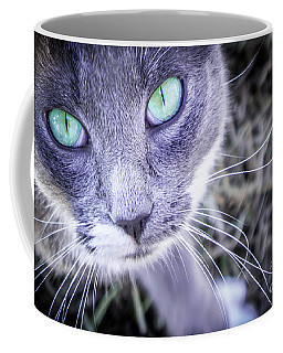 Coffee Mug featuring the photograph Skitty Cat by Cheryl McClure
