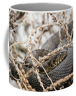 Coffee Mug featuring the photograph Snake by Jeannette Hunt