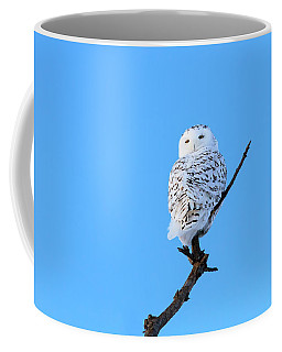 Coffee Mug featuring the photograph Snowy Owl by Gary Hall