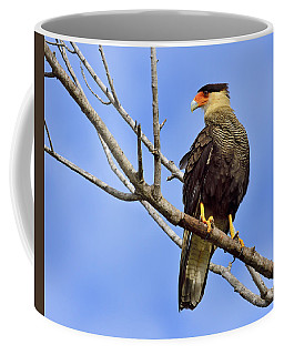 Southern Comfort Coffee Mug by Tony Beck