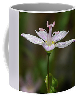 Spring Beauty 1 Coffee Mug