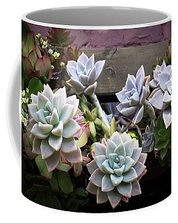 Coffee Mug featuring the photograph Succulents by Catherine Lau