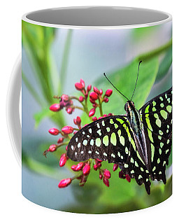 Coffee Mug featuring the photograph Tailed Green Jay Butterfly  by Saija Lehtonen