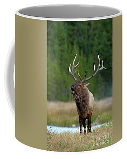 Coffee Mug featuring the photograph The Challenger by Sandra Bronstein