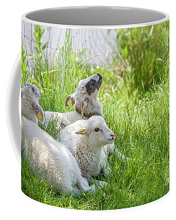 Coffee Mug featuring the photograph Three Little Lambs by Patricia Hofmeester