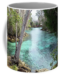 View From Spring 3 To Spring 2 At Three Sisters Springs Coffee Mug
