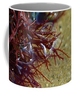 Tidepool Seaweed Coffee Mug