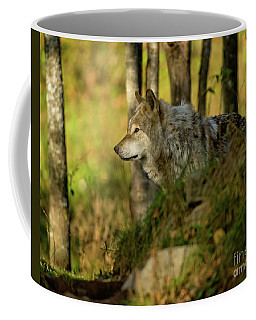 Timber Wolf In Forest Coffee Mug
