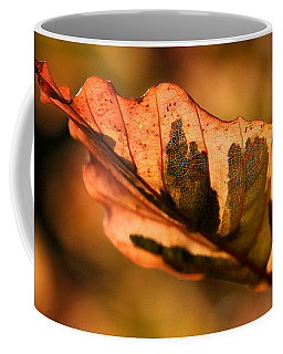 Coffee Mug featuring the photograph Tri-color Beech In Autumn by Angela Rath