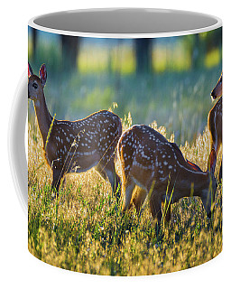 Coffee Mug featuring the photograph Triplets by John De Bord
