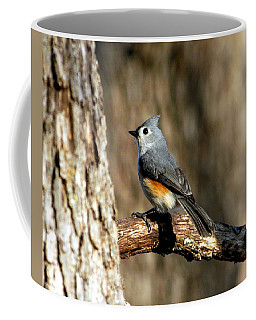 Tufted Titmouse On Branch Coffee Mug by Sheila Brown