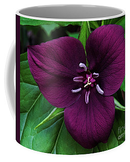 Vaseys Trillium Coffee Mug by Barbara Bowen