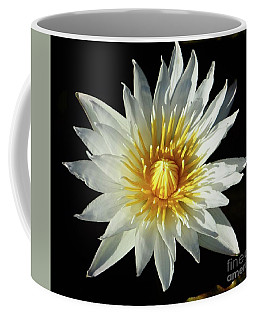 Coffee Mug featuring the photograph Water Lily Close Up by Cindy Manero