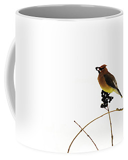 Waxwing Wonders Coffee Mug