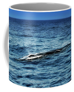 Whale Watching Balenottera Comune 3 Coffee Mug