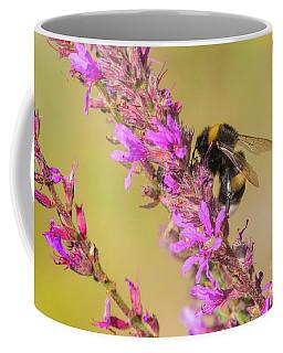 White-tailed Bumblebee - Bombus Lucorum Coffee Mug