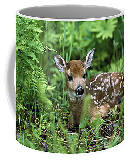 White-tailed Deer Odocoileus Coffee Mug