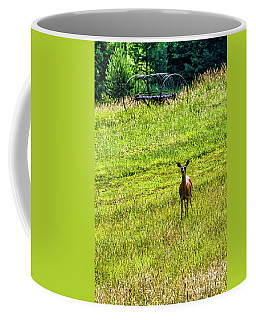 Coffee Mug featuring the photograph Whitetail Deer And Hay Rake by Thomas R Fletcher