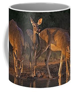 Whitetail Deer At Waterhole Texas Coffee Mug