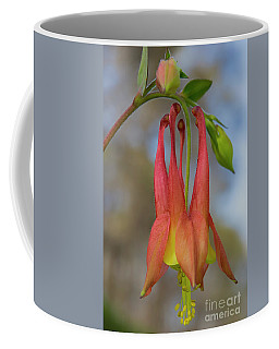 Wild Columbine Coffee Mug by Barbara Bowen