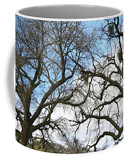 Coffee Mug featuring the photograph Winter Trees At Fort Tejon Lebec California  by Floyd Snyder