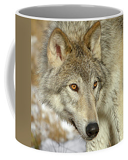 Coffee Mug featuring the photograph Wolf Portrait by Jack Bell