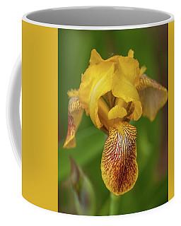 Coffee Mug featuring the photograph Yellow Bearded Iris by Brenda Jacobs